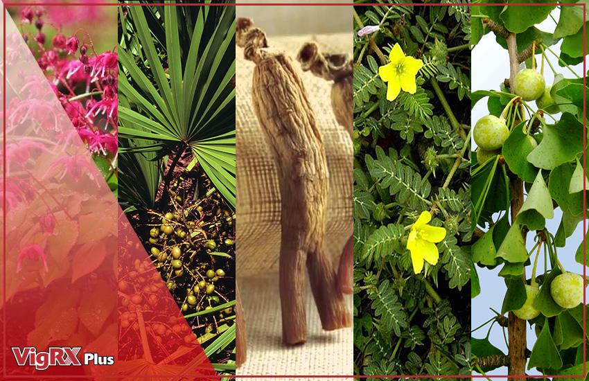 Plants for male enhancement